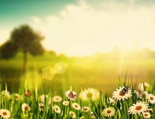 Polaarmõisa kevadpakkumised