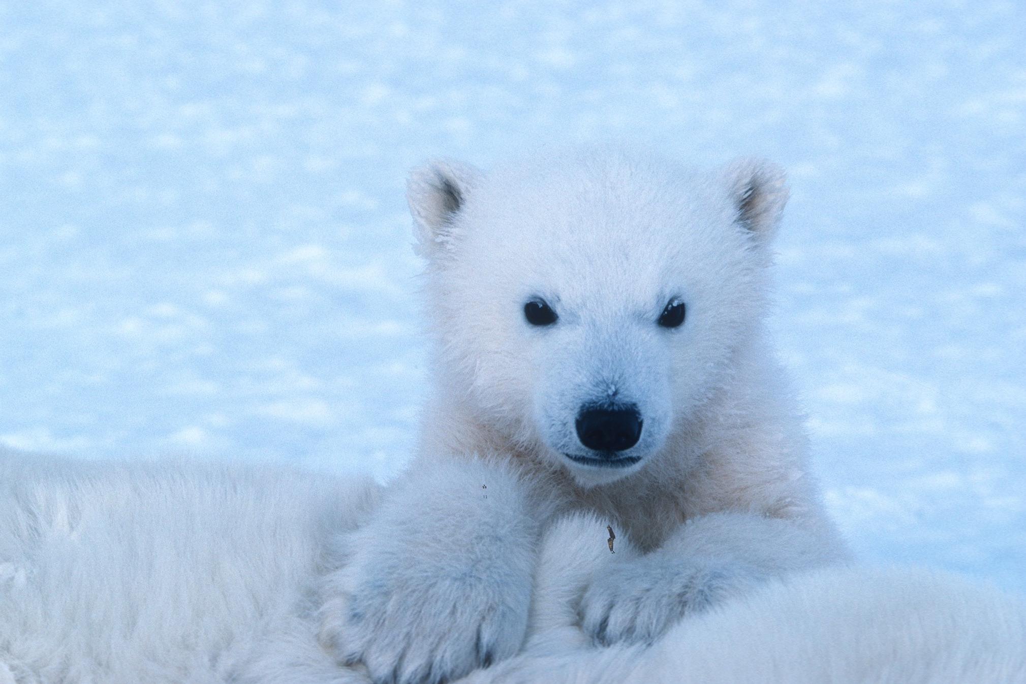 Jääkarupäev